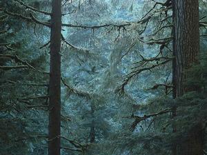 Обои Дремучий лес