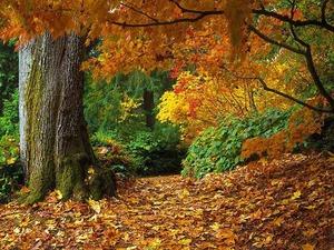 Обои Пестрая осень