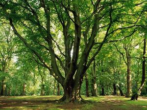 Обои Тенистые деревья
