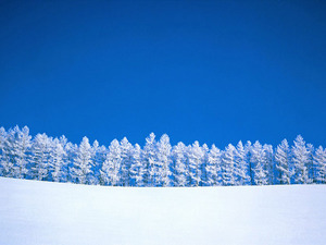 Обои Снежные красавицы