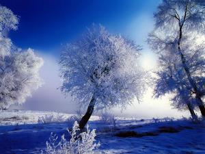 Обои Хрустальная зима