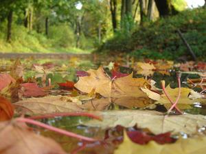 Обои Опавшие листья