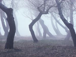 Обои Пьяный лес в тумане