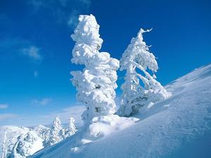 Обои Снежное чудо