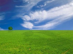 Обои Зелёный луг и голубое небо