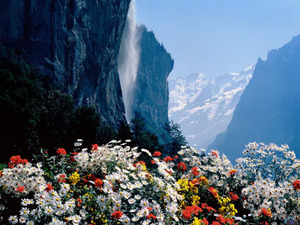 Обои Цветы в горах