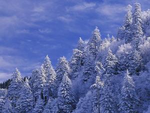 Обои Снежный склон