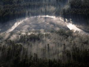 Обои Лес и река в тумане