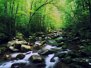 Обои Река в лесу
