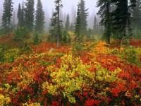 Обои для рабочего стола: Осенние краски