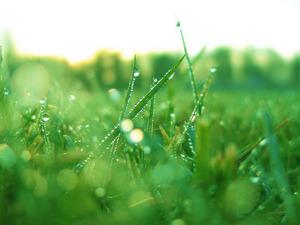 Обои Зелёная трава