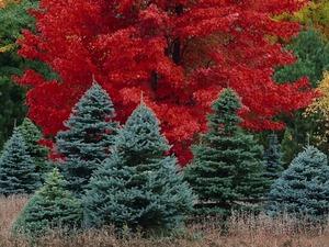 Обои Краски леса