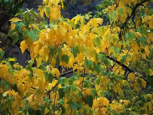 Обои Осенняя листва