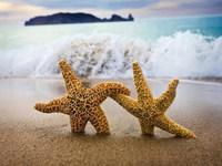 Обои для рабочего стола: Морские звезды на пляже
