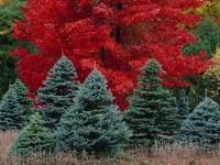 Обои для рабочего стола: Краски леса
