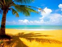 Обои для рабочего стола: Пальма на берегу океана