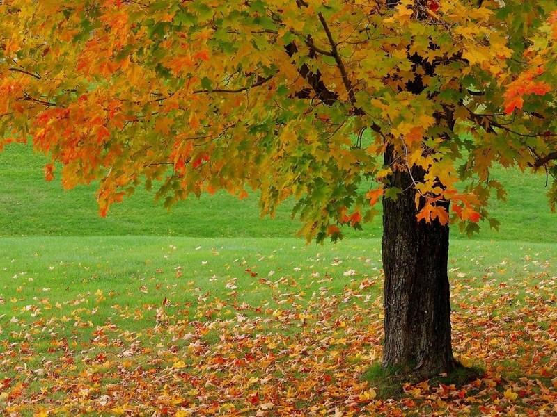 Картинки осень – самое романтичное и