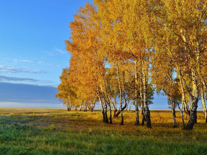 http://img.desktopwallpapers.ru/nature/pics/d491ad336199545a61a16.jpg