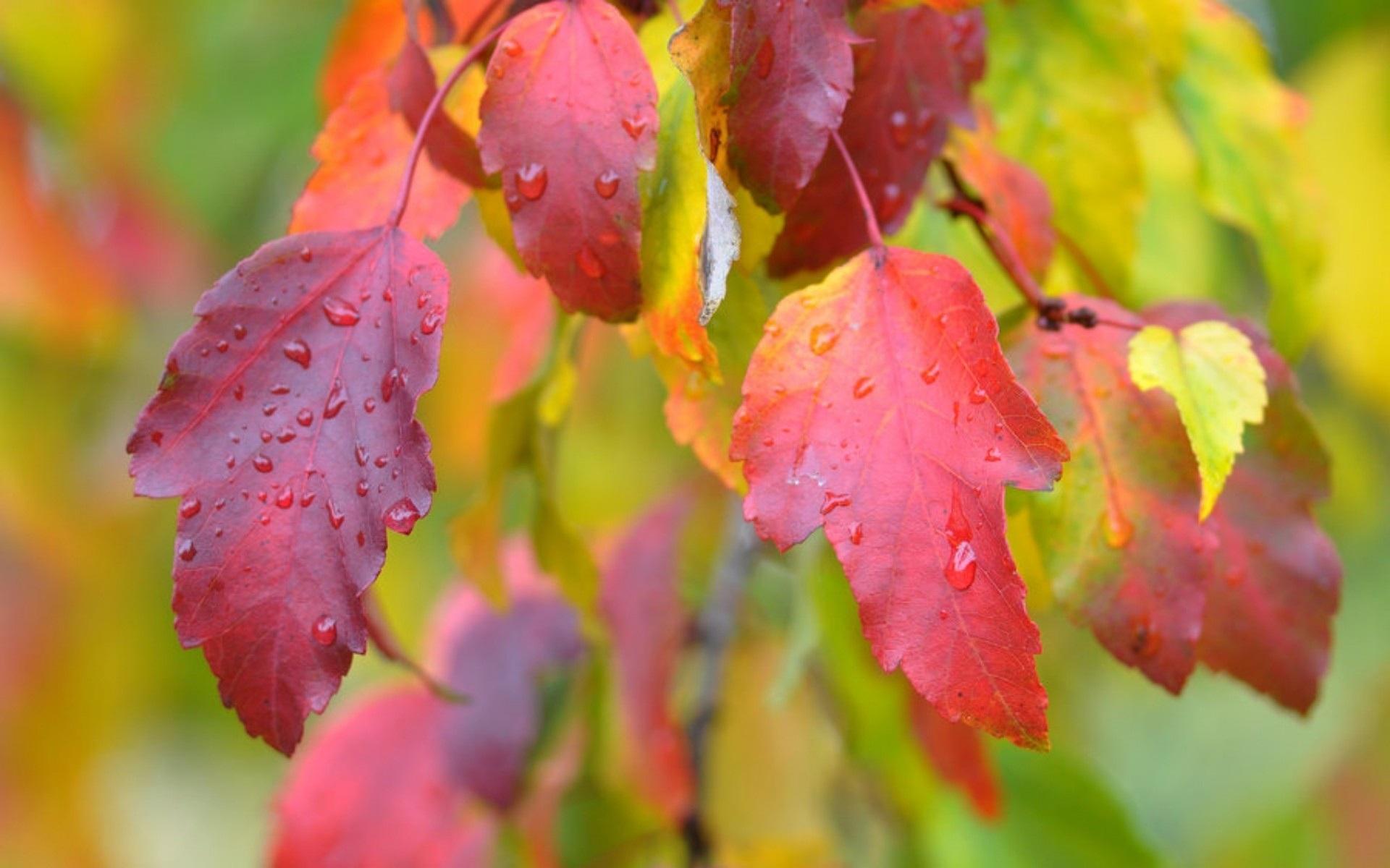 али обои на рабочий стол осень листья дождь скажем, для