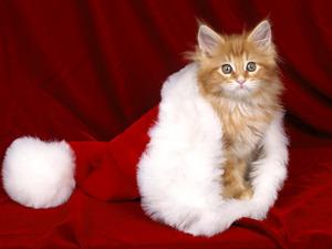 Обои Новогодний котёнок