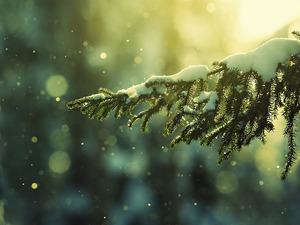 Обои Ёлка в волшебном снегу