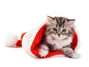 Обои Новогодний кот