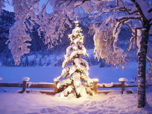 Обои Елка под снегом