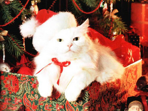 Обои Новогодний котик