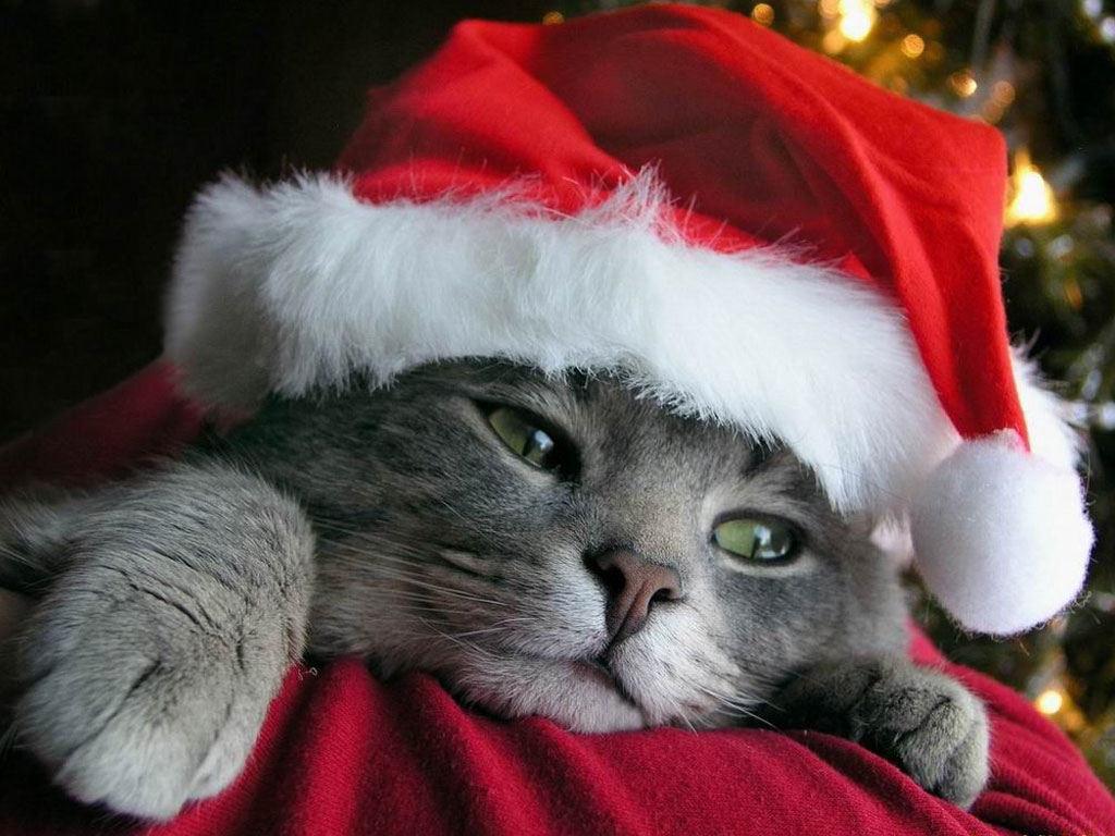 http://img.desktopwallpapers.ru/newyear/pics/santa-cat-1024.jpg