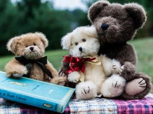 Обои Плюшевые медведи