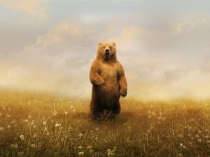 Обои Медведь на одуванчиковом поле
