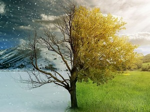 Обои Зима/лето