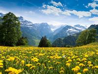 Обои для рабочего стола: Лето в горах