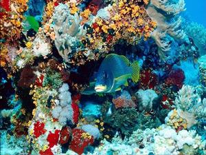Обои Рыбки в кораллах