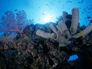 Обои Кораллы