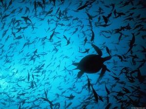 Обои Обитатели морской толщи