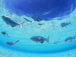 Обои Под водой