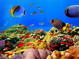 Обои 288 из раздела Подводный мир