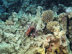 Обои 37 из раздела Подводный мир