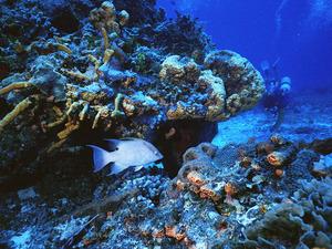 Обои 72 из раздела Подводный мир