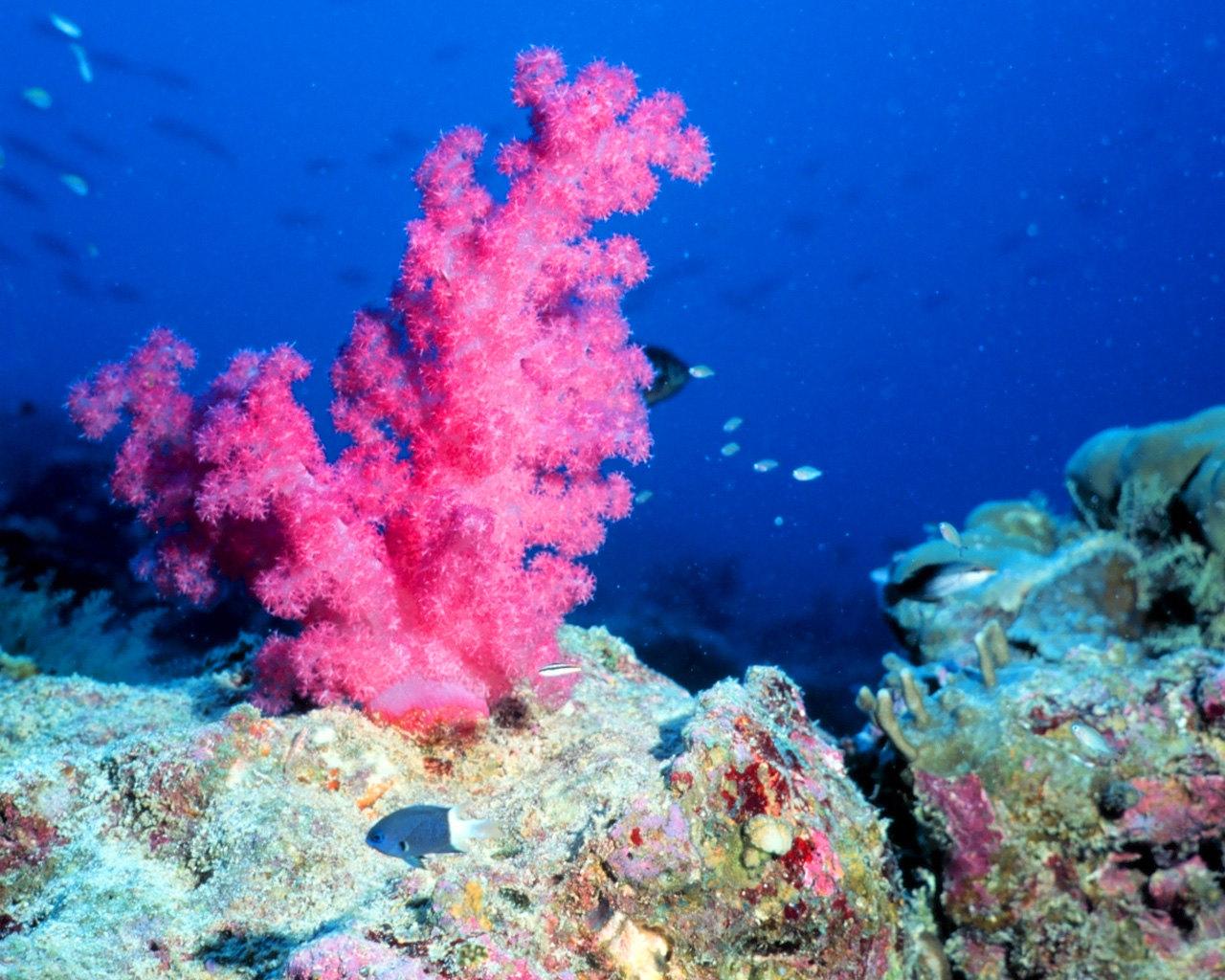 Картинка с кораллами