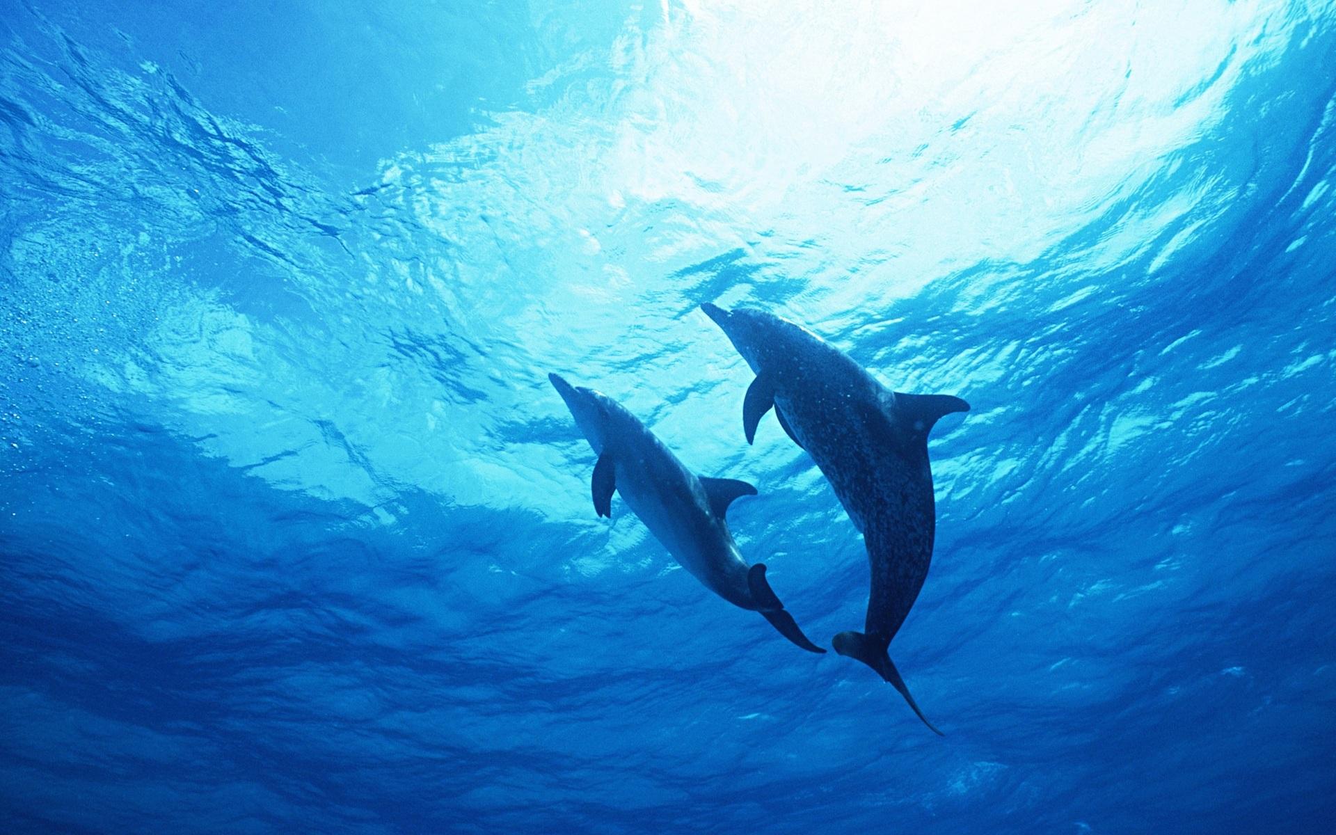обои на рабочий стол океан дельфины существо микроскопических размеров