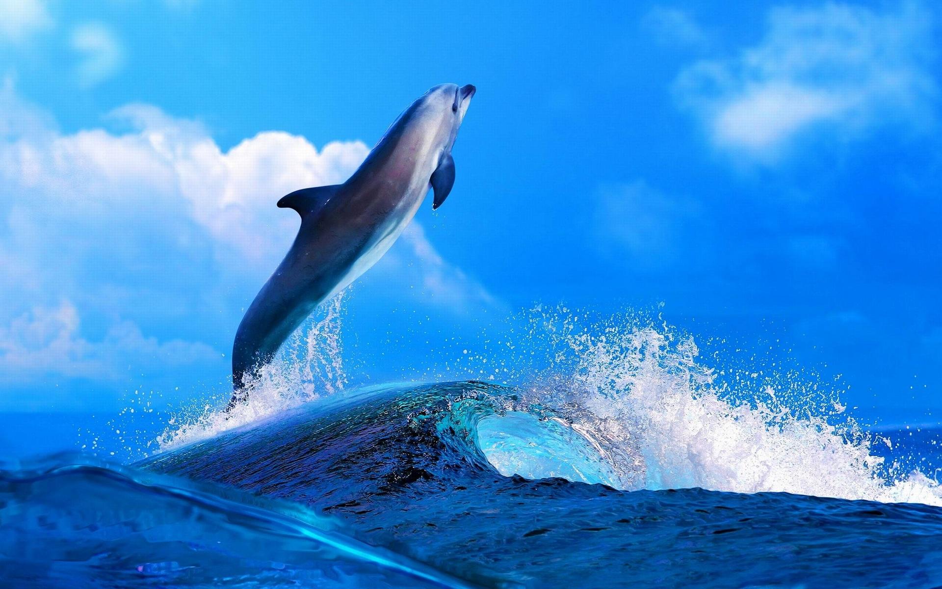 его, картинки дельфинов на весь экран конструкцию